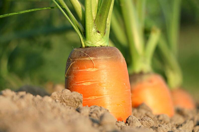 長野県の野菜